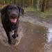 Thumbnail for Pets as Probiotics?